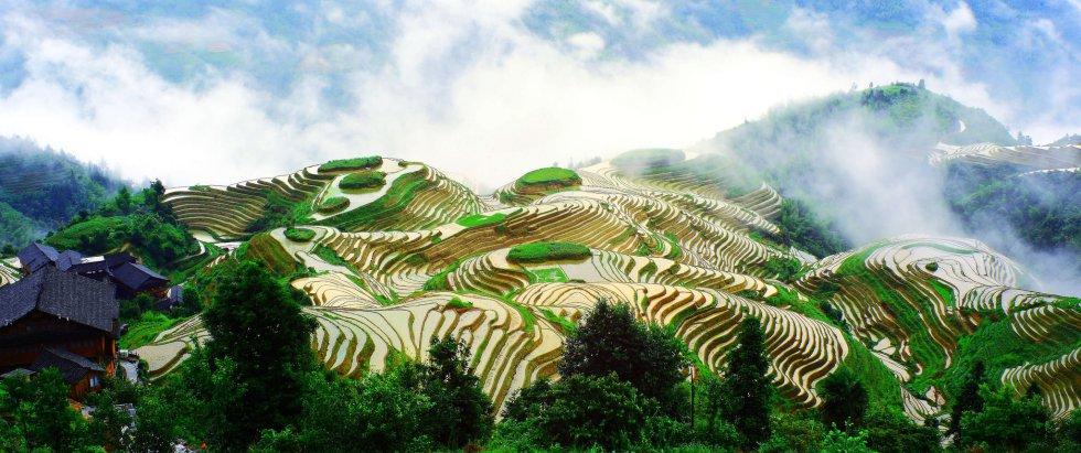 Nuevas Joyas De La Agricultura Mundial Según Fao